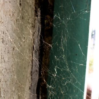 HOLDENMCINTOSH-2019-SpiderWeb.Series1-5